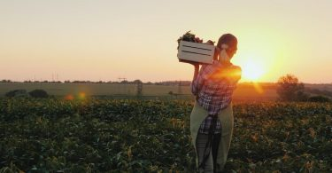 tipos de cultivo
